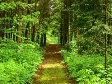 A Budakeszi Arborétum értékei