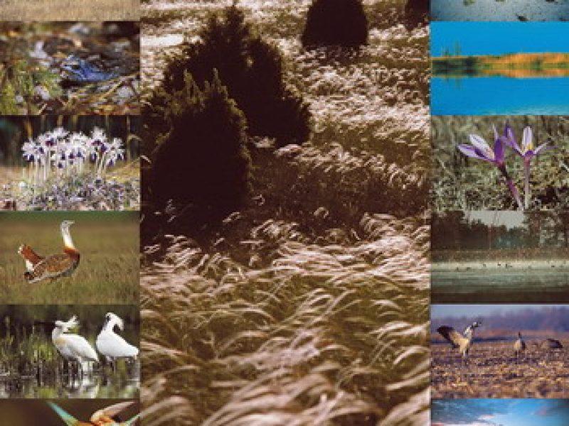 Túrautak a Kiskunsági Nemzeti Parkban Kecskemét