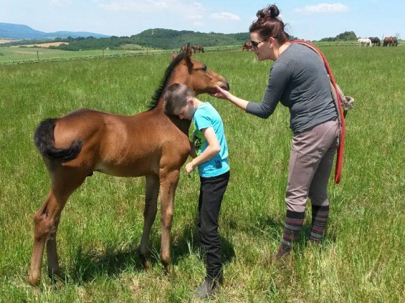 Cavallo Lovasudvar Csabdi
